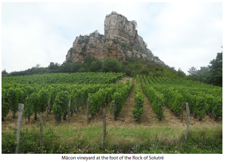 Mâcon vineyard at the foot of the Rock of Solutré