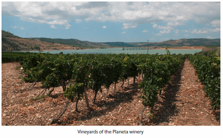 Vineyards of the Planeta winery