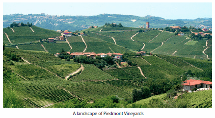 A landscape of Piedmont Vineyards