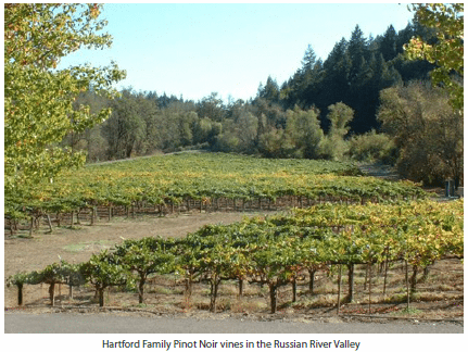 Hartford Family Pinot Noir vines in the Russian River Valley
