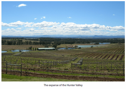 The expanse of the Hunter Valley