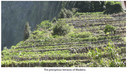 The preciptous terraces of Madeira