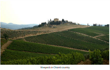 Vineyards in Chianti country
