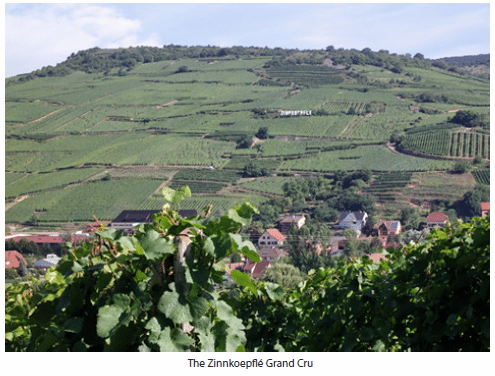 Wine-Guide-Alsace