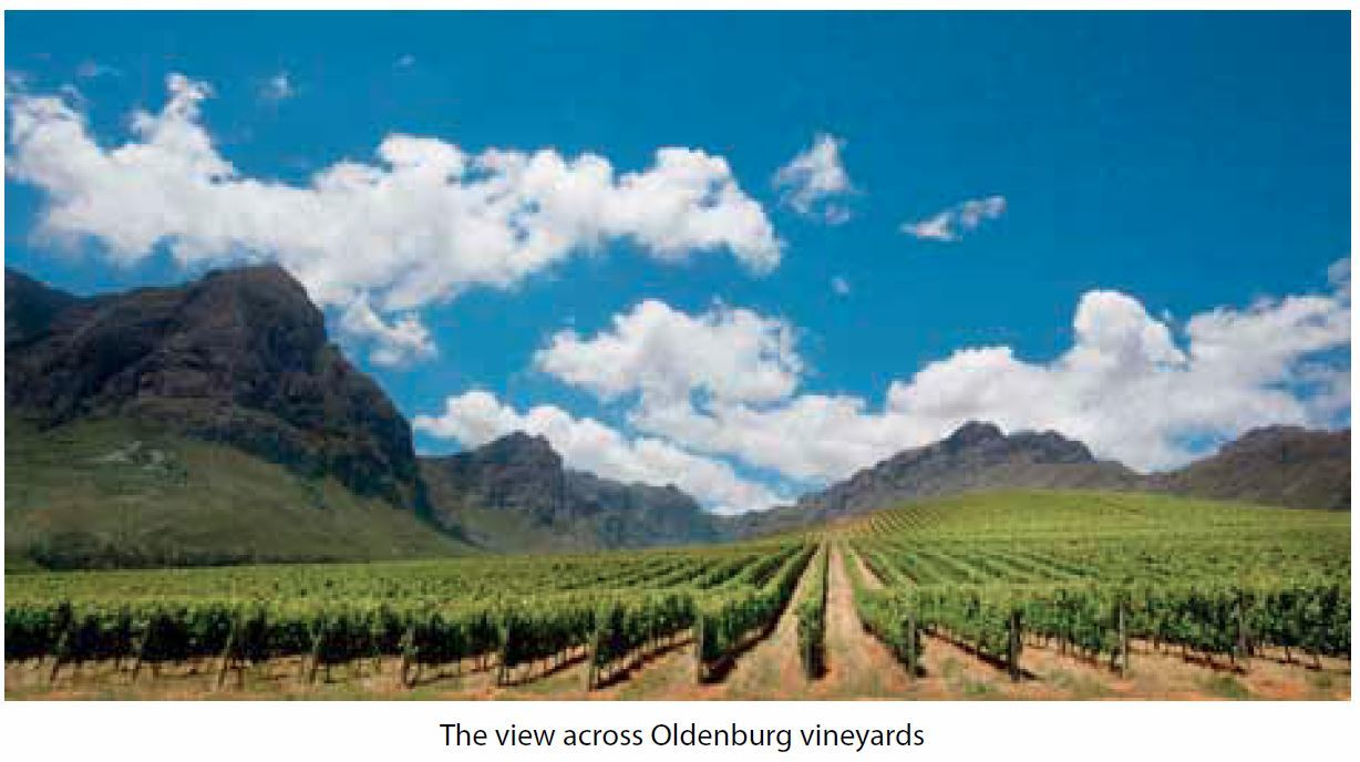 oldenburg-vineyards